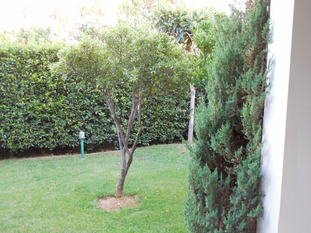 Vedere grădină